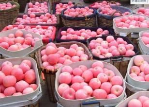 山东红富士苹果产地批发 精品红富士