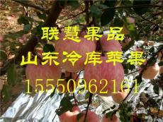 山东临沂苹果供应