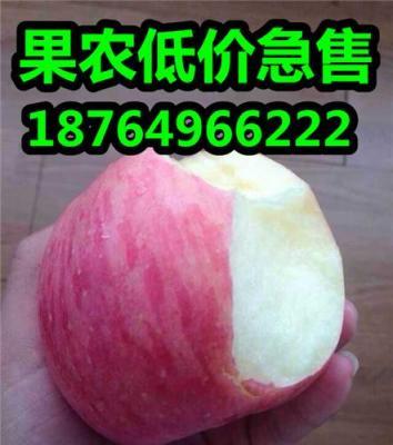 山东苹果供应基地山东红富士苹果价格