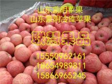 山东蒙阴苹果蒙阴苹果价格